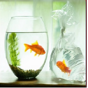 Aquarium delivery Hyderabad